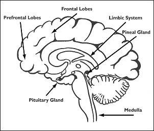 brain-2-.jpg